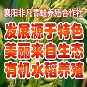 襄阳市非凡青蛙养殖合作社